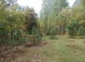 В Киевской области застрелили двух лесничих